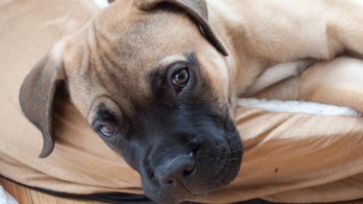 puppy-1105452_1920